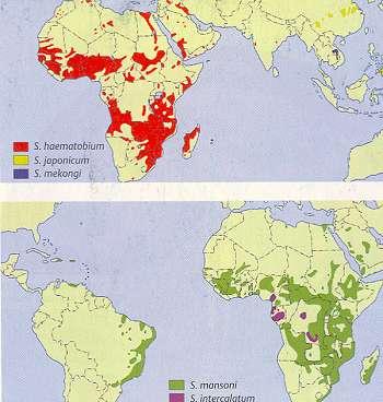 schistosomiasis verbreitung