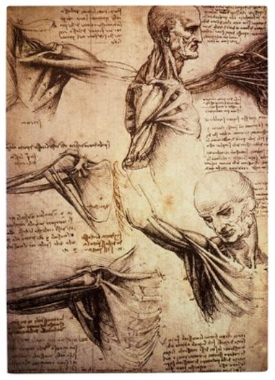 Das Lebendige im Toten erkennen – über die Geschichte der Anatomie ...