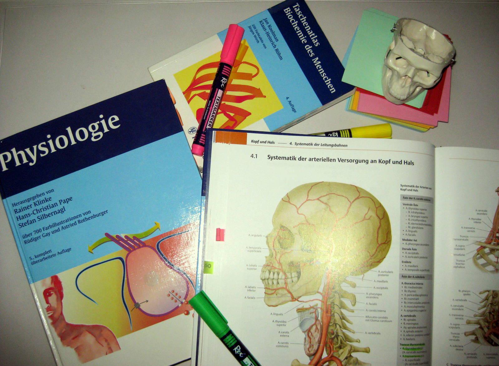 Nett Lernen Anatomie Und Physiologie Spiele Galerie - Menschliche ...