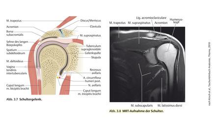 Das Schultergelenk im Physikum - Vorklinik - Via medici