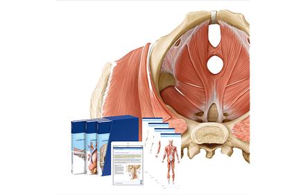 PROMETHEUS LernPaket Anatomie - Vorklinik - Via medici
