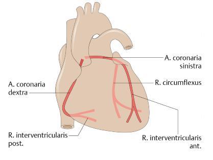 Notfall Herz Was Beim Infarkt Passiert Und Wie Man S Wieder